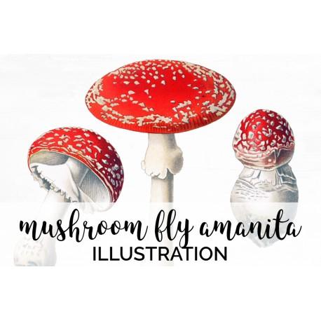 Mushroom Fly Amanita