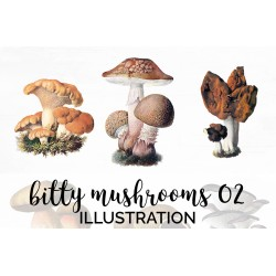 Bitty Mushrooms 02