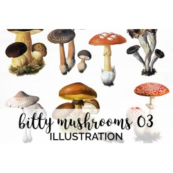Bitty Mushrooms 03