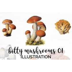 Bitty Mushrooms 01