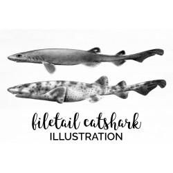 Filetail catshark