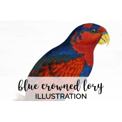 Blue Crowned Lory