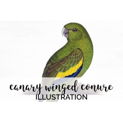 Canary winged Conure