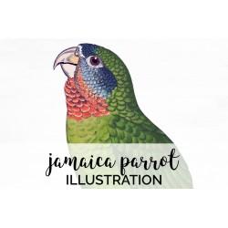 Jamaica Parrot