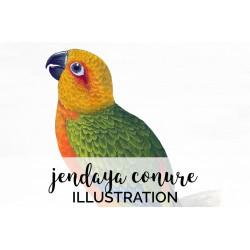 Jendaya Conure