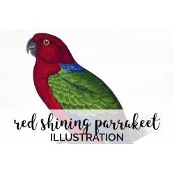 Red Shining Parrakeet