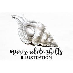 Murex White Shells