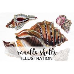 Ranella Shells