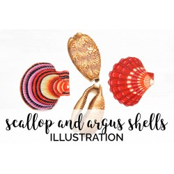 Scallop and Argus Shells