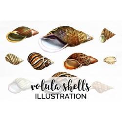 Volula Shells