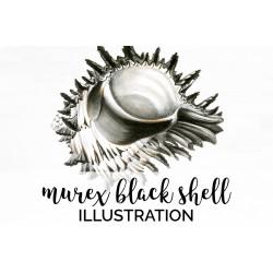 Murex Black Shell