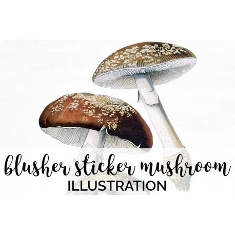 Blusher Sticker Mushroom