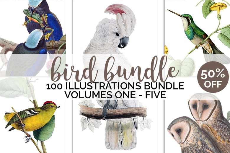 Bird Bundle E01