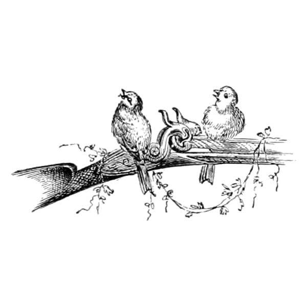 birds on rifle (free engraving illustration)