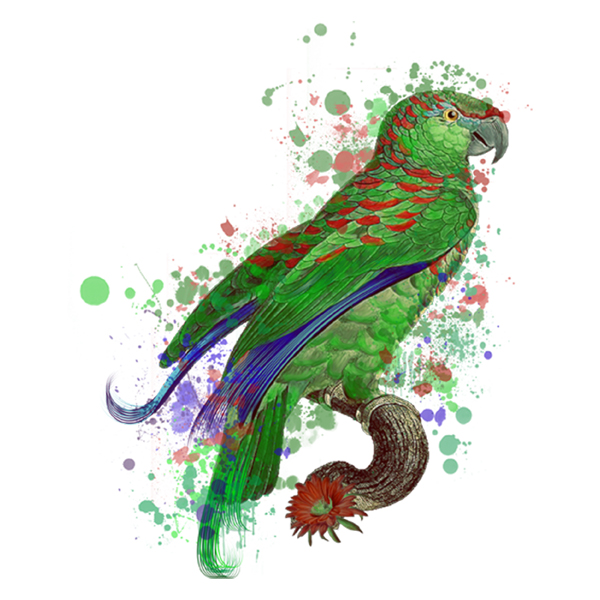 painted parrot (free download)
