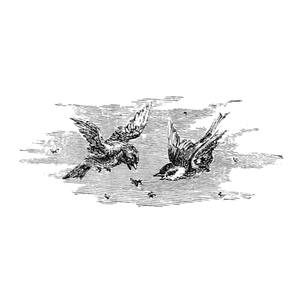 Flying birds (free vintage download)