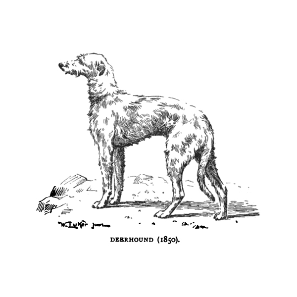 deerhound (free download)
