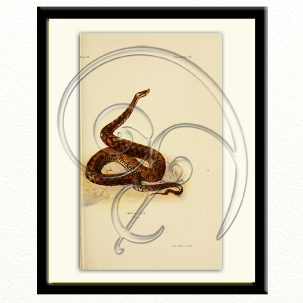 black viper (free download)