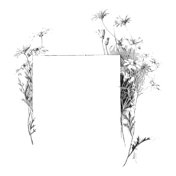 flower frame2 (free download)