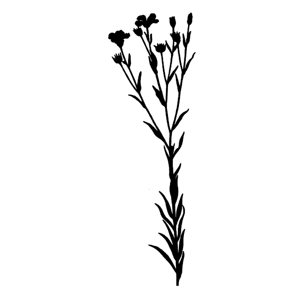 wild flower silhouette (free download)