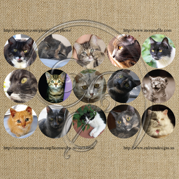 Cat Portraits (free download)