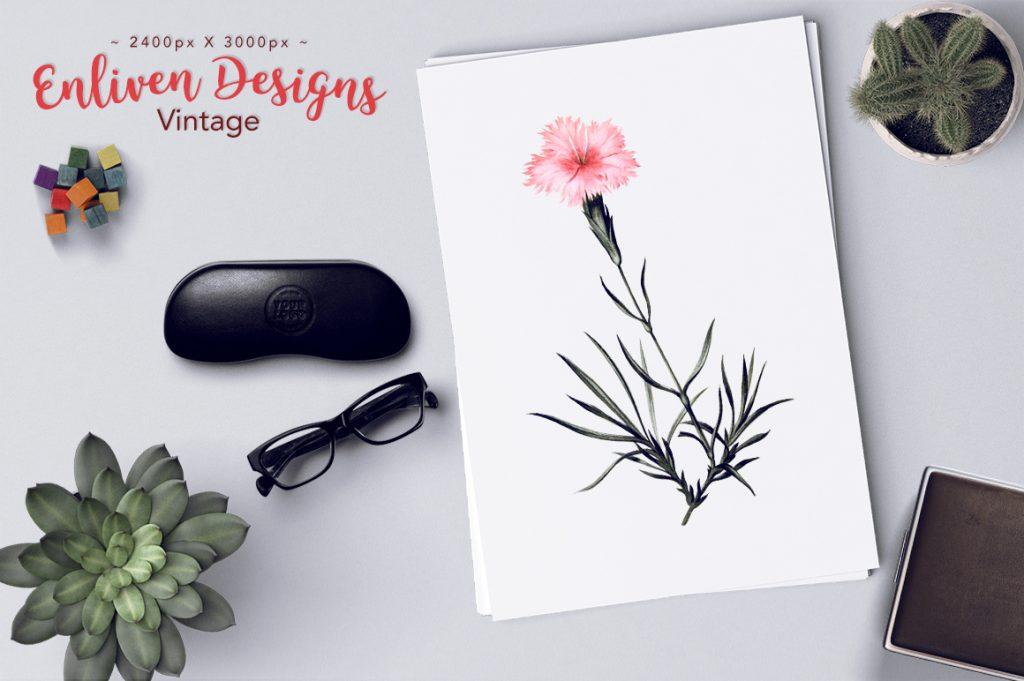 Vintage Flower Clip Art Fringed Pink