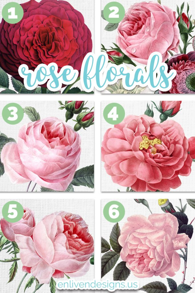 Rose Florals 1. Hybrid Remontant Rose (red rose) 2. Flower Bouquet Redoute (pink rose) 3. Pink Cabbage Rose (pink rose) 4. Rose of Orleans (pink rose) 5. Hundred Leaf Rose (pink rose) 6. Pink Cyme Rose (pink rose) enlivendedsigns.us