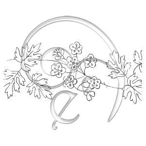 134 Hawthorn Blossom (free download)