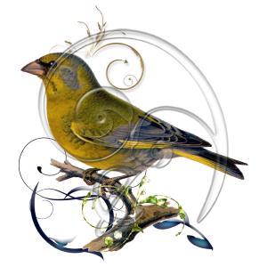 vintage bird swirl 02 (free download)